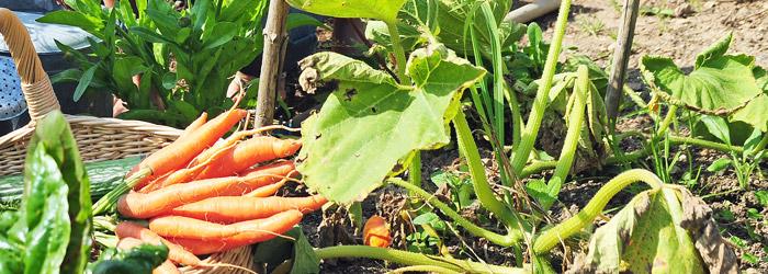Beetzaun um das Gemüse Beet bauen